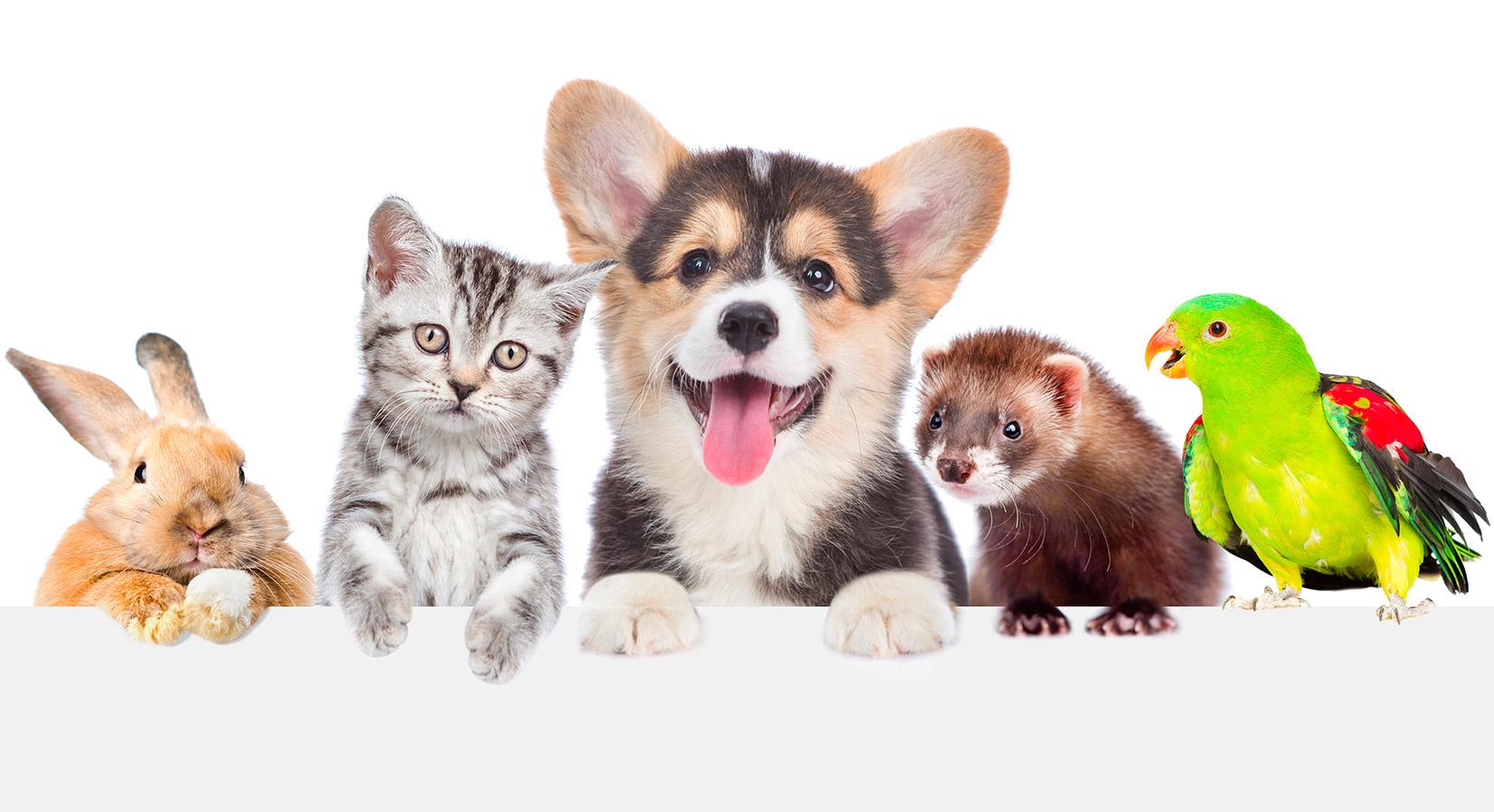 Integratori per animali | Erboristeria Il Girasole