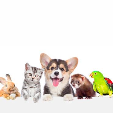 Dall'Australia 10 Essenze Floreali per il benessere degli animali